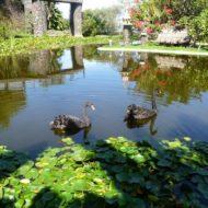 Jardin Aquatico